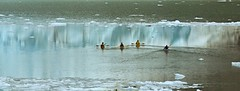 Kayak in freezing water- Patagonia Chile IMG_9912 (pr.cuenod) Tags: chile travel patagonia ice southamerica water sport reflections chili kayak glacier iceberg patagonie glaciar hielo icecap americadelsur ohigginsnationalpark serannoglacier