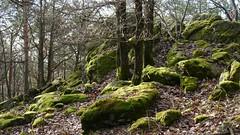 Heimat der Elfen  /  Habitat of the fairies (rudi_valtiner) Tags: autumn trees fall forest austria österreich moss rocks stones herbst boulder steine fairies wald bäume moos autriche burgenland bernstein metaphysics elves elfen felsen metaphysik ipernityexplored