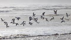 On the Beach (:: Blende 22 ::) Tags: storm beach water birds clouds canon eos wasser waves cloudy seagull dunes australia driftwood ii tasmania 5d australien westcoast wellen strahan marl tasmanien waterwaves ef70200mmf4lisusm canoneos5dmarkii