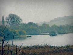 A Bird's Haven (Dazzygidds) Tags: haven attenboroughnaturereserve nottinghamshirenaturereserve