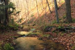Burns Run Wild Area (5) (Nicholas_T) Tags: autumn trees creek forest moss lowlight rocks stream hiking pennsylvania creativecommons ravine deciduous coniferous riparian leaflitter clintoncounty chuckkeipertrail pennsylvaniawilds sproulstateforest burnsrun burnsrunwildarea