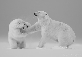 Parent - Cub Interaction in Black & White
