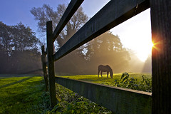 Morning Mist, Stapleford (Rich Saunders) Tags: morning autumn horse sun sunlight mist rural fence countryside country pasture grazing hertfordshire hertford bucolic stapleford