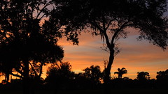 December 27 Sunset. (Jim Mullhaupt) Tags: pink blue trees sunset red wallpaper orange sun color weather silhouette yellow clouds landscape evening oak nikon flickr sundown florida dusk palm tropical coolpix sarasota cortez bradenton p510 mullhaupt jimmullhaupt
