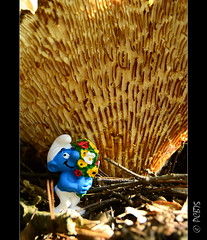 Per molts anys nen!!! (PCB75) Tags: mushroom mira foret seta champignon pilz setas bosc magia  bolets bolet schwammerl  onddo mgic  goita