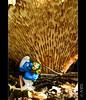 Per molts anys nen!!! (PCB75) Tags: barrufet pitufo bolet mushroom champignon mira goita màgic magia seta setas bolets pilz schwammerl 蘑菇 onddo μανιτάρι гриб bosc foret