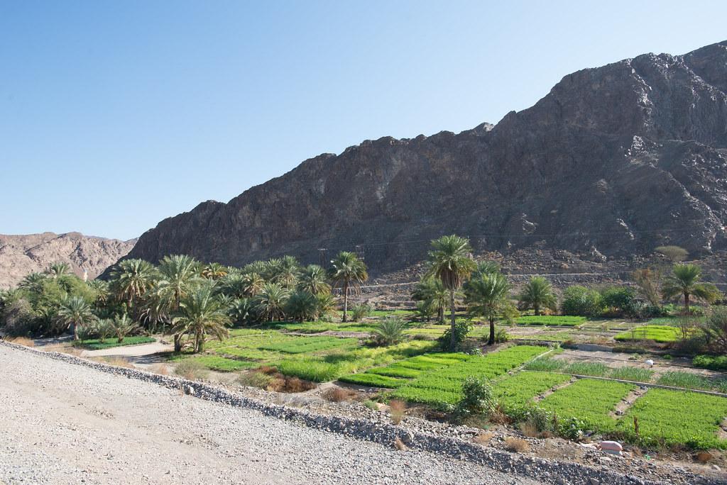 Farming in Oman