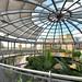 Sunderland Museum & Winter Gardens (8)