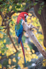 Macaw. (LisaDiazPhotos) Tags: nature zoo san wildlife conservation diego macaw global animalportrait lisadiazphotos sandiegozooglobal