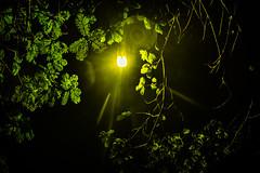 Green Around The Lamp (Ilakkiaraj) Tags: street tree green leaves earlymorning chennai besantnagar