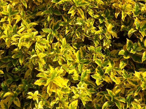 Bright Yellow Nature