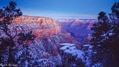 Blue Hour - South Rim (magnetic_red) Tags: trees light snow beautiful sunrise nationalpark grandcanyon bluehour americanwest southrim expiredfilm pentax67ii ektachromevs scenicwonder
