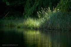 Sunny spot (Cor de Hamer (www.cordehamer.nl)) Tags: loo sun water spring pond spot veluwe apeldoorn paleispark