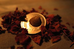 Smaller than a coin - Macro Mondays (nathaliedunaigre) Tags: light coin treasure lumire shell smaller pice objets monnaie trsor coquillage