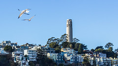 Coit Tower (Magerson) Tags: sanfrancisco california city cidade urban usa arquitetura architecture us streetphotography coittower northamerica urbano estadosunidos sofrancisco architecturephotography urbanphotgraphy
