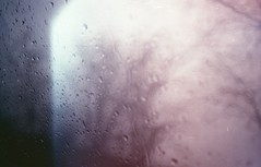 Rain (Alessandra Papagni) Tags: pink trees winter italy cloud cold color tree film me window water car rain fog alberi clouds analog 35mm vintage photography 50mm drops lomography italia nuvole grigio sad purple pentax cloudy bokeh pastel hiver gray rosa shades silouette retro iso finestra negative lilac 400 indie roll epson rolls mm analogue fotografia melancholy 50 35 nebbia albero acqua inverno pioggia macchina freddo froid malinconia analogica lilla gocce analogic pentaxme nuvoloso pellicola pellicule sagome sfumatura pastello v370