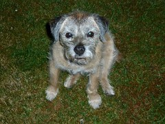 Blitzlicht (Hans-Jrgen Bckmann) Tags: alabama hund blitzlicht