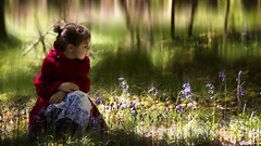 Bluebell Girl... (fearghal breathnach) Tags: portrait blur bluebell bluebells child childphotography processing postprocessing flowers pose woods trees devilsglen girl littleredridinghood