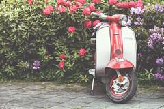 Lambretta LI 150 (marcducati) Tags: summer flower fauna canon vintage li bush italian flora outdoor sunny scooter retro 150 lambretta hip moped 70200 michelin rockers mods 6d twotone italiaans struik li150 lambrettali150 lambrettali canon6d