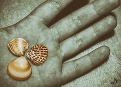 Conchas (Elsa Fdez) Tags: color blancoynegro dedos mano concha conchas desaturacin