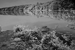 Nockamixon State Park Quarry Trail DSC1516 (dweible1109) Tags: reflection nikon infrared treeline penna nockamixonstatepark lakenockamixon stilllake pastateparks 18135mmnikor d5100