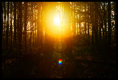 Forest Sunset V (Josh Rokman) Tags: nature outdoors nikond7000 swamp marsh forest sunset natural sun gold golden