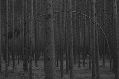 tired (Mindaugas Buivydas) Tags: wood trees bw tree pine forest dark spring mood moody darkness april lithuania darkforest lietuva rdninkgiria rdninkaiforest