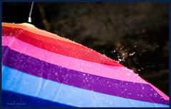C'est pas bientt fini, non ?  Is it not over soon ? (www.nathalie-chatelain-images.ch) Tags: water colors rain umbrella drops nikon eau couleurs pluie parapluie gouttes