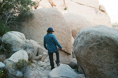 Between boulders (kaysedilla) Tags: tree film rock 35mm photography kodak joshua outdoor climbing scrambling