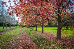 Otoo (Laura Mti) Tags: road autumn red verde green leaves landscape hojas rojo camino paisaje otoo tronco