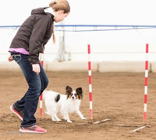 DOGSmart Training Agility Fun Match 2016-4