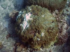 img_3764oa (www.linvoyage.com) Tags: sea thailand island sailing yacht corals racha        deadcorals