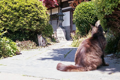 20160508-11 (GenJapan1986) Tags: 2016 fujifilmfujicolorsuperiaxtra400 nikonnewfm2 はま屋 ネコ フィルム 動物 宮城県 東北地方 田代島 石巻市 離島 film japan 日本 island tashirojima miyagi cat animal
