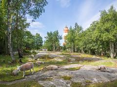 Isokari (Jumilla) Tags: lighthouse nature suomi finland sheep lamb archipelago lammas saaristo majakka isokari olympusomd