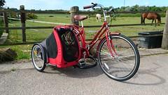 SamSam  doggie sidecar (The bike guy !) Tags: dog frankby england workshop sequin wirral kinlan carrying bicycle bike holland berkel aad concept design sidecar doggie samsam