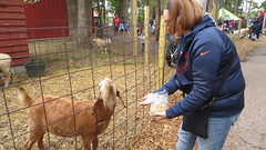 nathalie. county line orchard. october 2015 (timp37) Tags: county fall october feeding goat indiana nat orchard line nathalie 2015