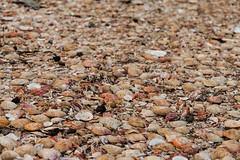 Makavk (Fjola Dogg) Tags: summer naturaleza nature canon iceland islandia natureza natur natuur natura nopeople sland nttra stykkishlmur makavk lanature evropa naturen 50d naturae naturalesa breiafjrur canon50d vesturland evrpa lislande fjoladogg fjladgg