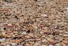 Í Maðkavík (Fjola Dogg) Tags: summer naturaleza nature canon iceland islandia natureza natur natuur natura nopeople ísland náttúra stykkishólmur maðkavík lanature evropa naturen 50d naturae naturalesa breiðafjörður canon50d vesturland evrópa lislande fjoladogg fjóladögg