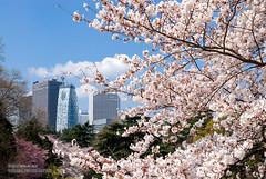 (Fotarts) Tags: flower spring vernal    building tokyo shinjuku japan