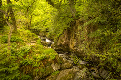 Peaceful Stream. (Ian Emerson) Tags: trees summer england fern water canon landscape waterfall rocks stream lakedistrict peaceful greenery brook 1855mm shrubs hoya ullswater ndx400 babblling