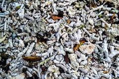 IMG_2244 (erielleroe) Tags: travel nature beach corals sea water philippines sorsogon matnog rock texture outdoor landscape seaside shore