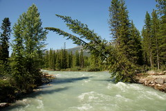 Bow River (Stefan Jrgensen) Tags: canada canadianrockies rockymountains 2013 sony dslra700 a700 river water bowriver trees tree flowingwater flow blue bluesky