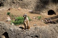 1P8A2668 (SimpleCurses) Tags: memphis zoo