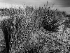 _7250503-Editar (josem_alvarez25) Tags: playa banco y negro mar caseta palmeras olympus omd em10
