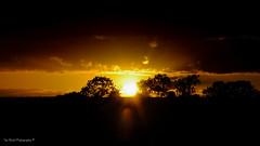DSC_0169 (timmie_winch) Tags: nikon nikond3000 d3000 august august2016 2016 sun sunset sunsetsuffolk sunsetoversuffolkcountryside sunsetovercornfields sunsetovercornfield silhouette 18105mm 18105vr nikon18105mmvrlens shadows golden goldenhour goldenlight elliedunn ellie eleanordunn ells eleanor ellsdunn dunn landscape landscapephotography landscapephotographer naturephotographer naturephotography nature timwinchphotography tim timwinch winch debenham ip14 suffolk