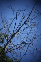 Dying Tree (gripspix (Catching up!)) Tags: 20160807 nature natur tree baum branches äste dead abgestorben holgalensforcanon plastiklinse badlens vignettierung