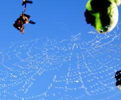 Captured mist (Inspiredbyournature) Tags: webs spiderwebs dew drops spider