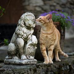 Amore impossibile (jandmpianezzo) Tags: tequila gatto leone amore impossibile fiori giardino tigrato rosso baci outdoor animali petc