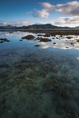 Coral beach (Sir Mashington the 27th) Tags: beach coral island hamilton australia whitsundays 6d