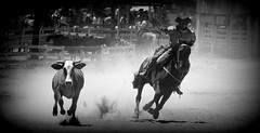 Mandando pata (Eduardo Amorim) Tags: brazil horses horse southamerica brasil caballo cheval caballos lazo kuh cow rind cattle cows ox ganado cavalos oxen mucca pferde cavalli cavallo cavalo gauchos pferd riograndedosul pampa bois khe vache vaca vacas campanha brsil vaches boi chevaux gaucho buey  lasso amricadosul mucche lao fronteira boeuf vieh gacho amriquedusud  gachos  boeufs buoi sudamrica rinder gado suramrica amricadelsur bueyes sdamerika mue pinheiromachado  bestiami btail americadelsud americameridionale campeiros campeiro